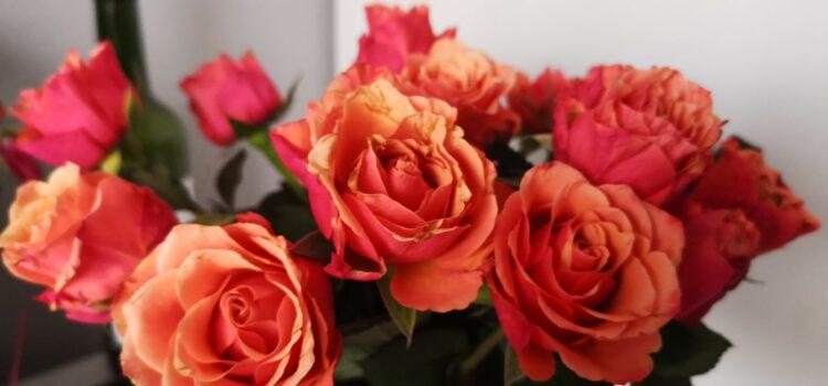 Proč Francouzi objevují květináč růží