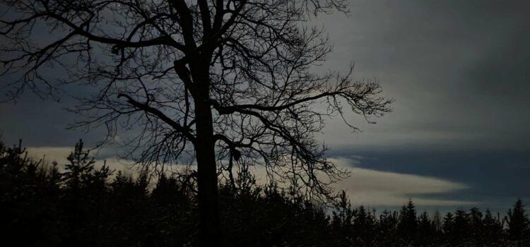 Brdské stíny a Kočka divoká zpět na Brdech