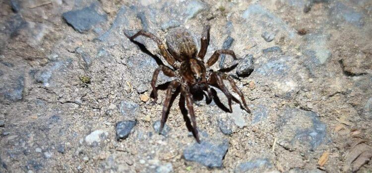 Pavoučí les na Brdech